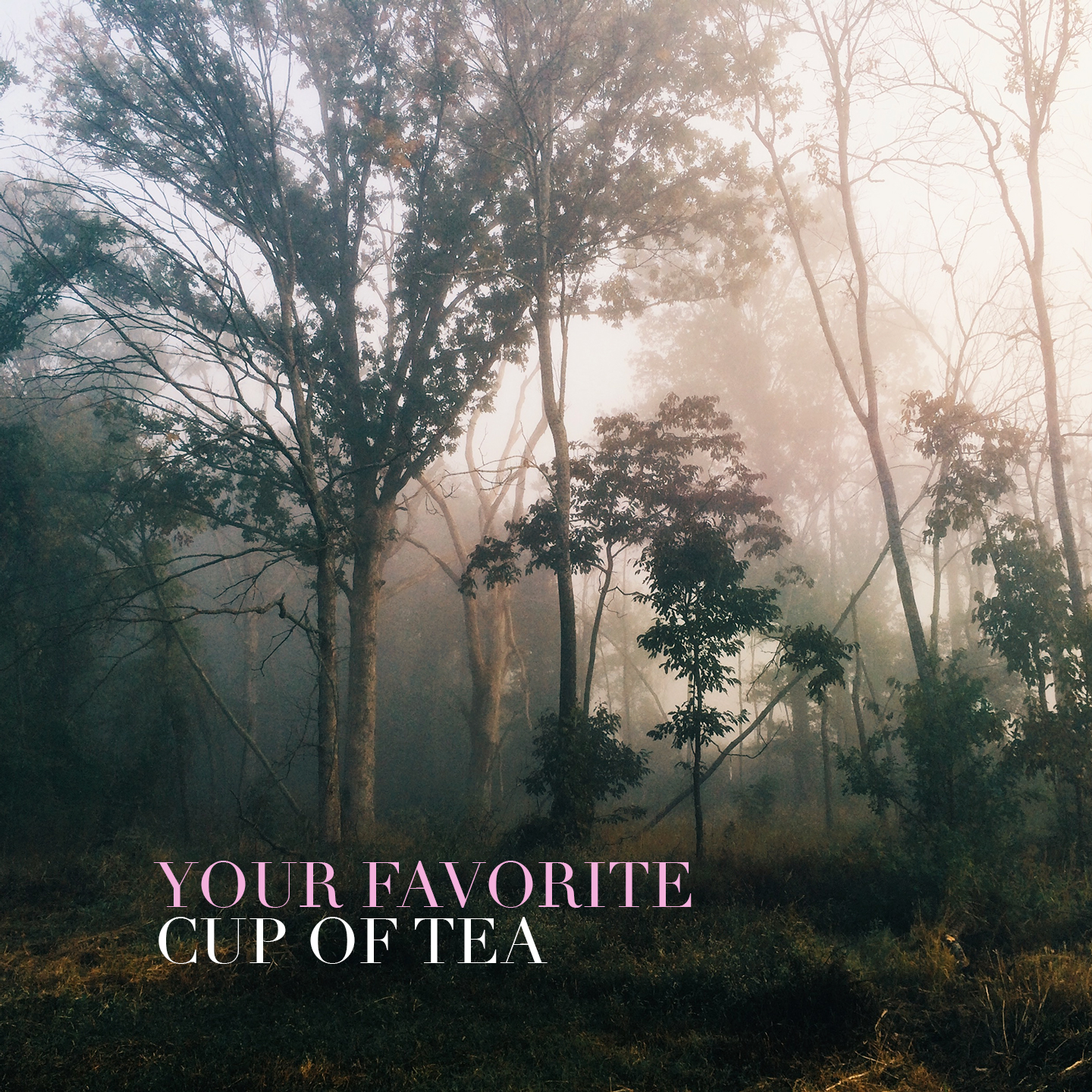 Erik Thunberg - Your Favourite Cup Of Tea